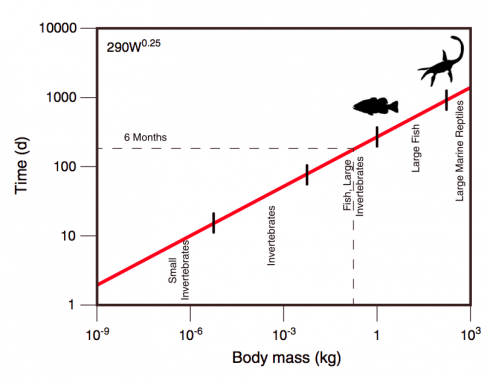 Allometric relationship between body size and time to death by starvation for multicellular poikilotherms in the absence of food (red, drawn from the equation of Peters [1983, p. 42]). Names of various types of organisms are shown as an indication of body size. Image and caption from Robertson et al., 2013.