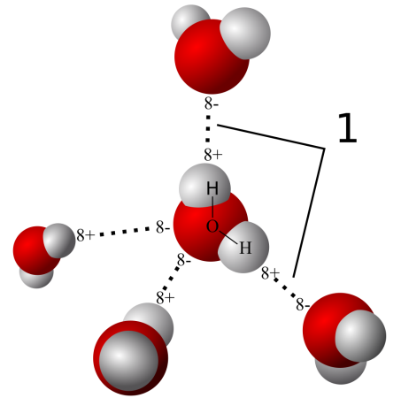 "Hydrogen bonding among water molecules is due to the shape of the individual molecule. Since the molecule is ""bent"" one end has a slightly more negative charge and the other a slightly more positive. Image by User Qwerter at Czech wikipedia."