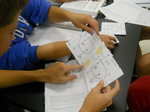Ms. Mertz had students tape two glucose molecules together to form maltose.