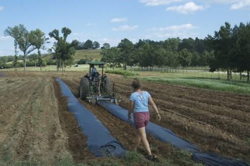 Laying down the plastic using a tractor. The mechanism simultaneously lays down a drip line beneath the plastic for watering.