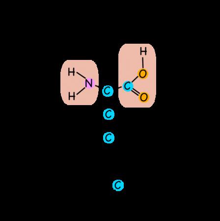 The amino acid methionine, aka 2-amino-4-(methylthio)butanoic acid.
