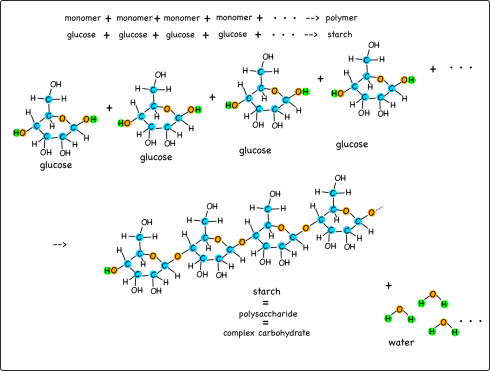 Starch molecules form by chaining together glucose molecules. Water is a byproduct.