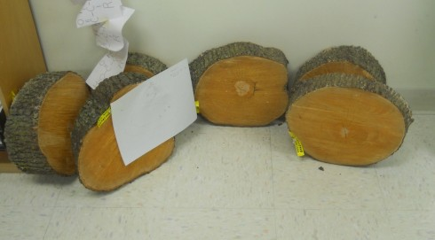 Six Bradford Pear tree slices, cut on  November 25th, 2013.