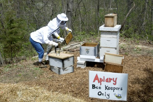 Placing the nukes into the hives.