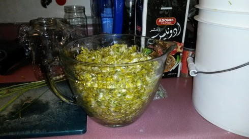 Two quarts (about 4 liters) of dandelion flowers for making a gallon of wine.