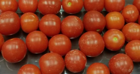 Naturally grown tomatoes from the TFS farm.