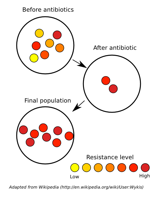 bacterias and viruses had grown some immunity to antibiotics Start studying the immune system (diseases test) learn vocabulary, terms, and more with flashcards, games, and other study tools  on the surfaces of viruses, bacteria, and other.