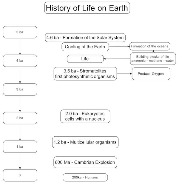 Timeline Of Life Montessori Muddle