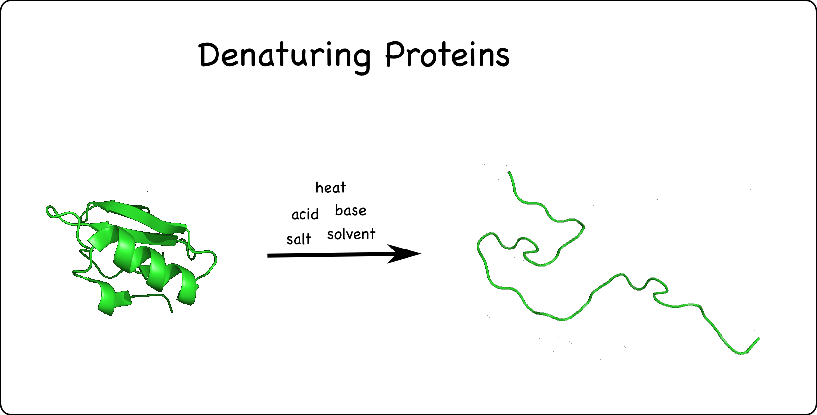 proteins can be denatured unfolded with heat acids bases salts and